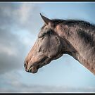 Just another Horse Portrait by Henri Ton