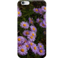 Hoary Tansyaster-Signed-#9698 iPhone Case/Skin