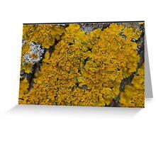Lichens Greeting Card