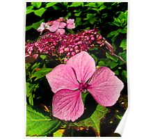 Delicate Pink Flower Poster