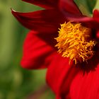 Bright red flower by pulen