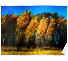 Windy Poplars on Lake Ontario Poster