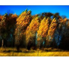 Windy Poplars on Lake Ontario Photographic Print