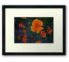 Flowers along the Canal  Framed Print