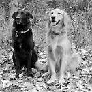 Maggie and Hunter by Jennifer Hulbert-Hortman