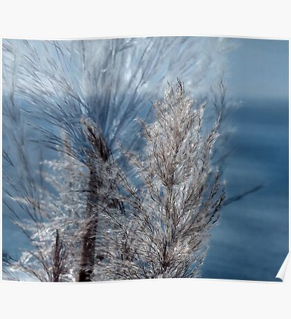 Dreaming California Cattails Poster