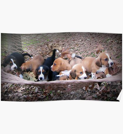 Free Puppies! Poster