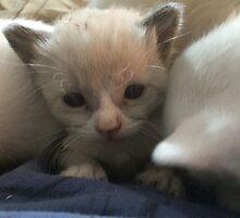 Worlds Cutest Kitten by silverdragon