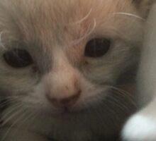 Worlds Cutest Kitten Sticker