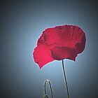 Remembrance by Bel Menpes