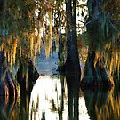 Autumn Amidst the Cypress by Alison M