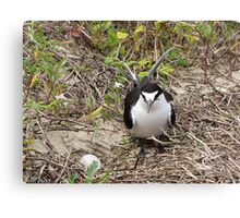 A very proud Sooty Tern- Look at my egg! Canvas Print