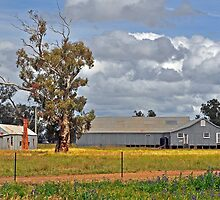 Tubbo Station Shearing Shed by Terry Everson