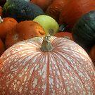 Fall harvest by David Lee Thompson