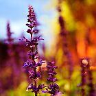 Purple flower by Arbaes
