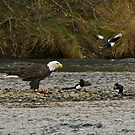 Eagle and Magpies by Ken Scarboro