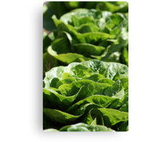 Decorative Lettuce Canvas Print