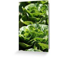 Decorative Lettuce Greeting Card