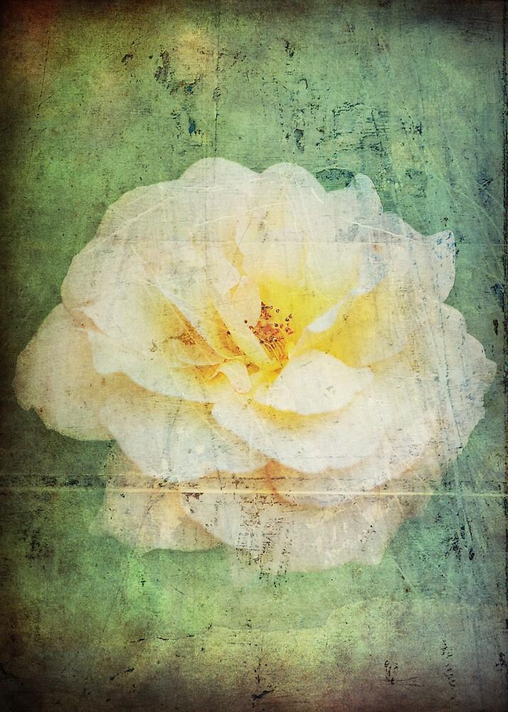 Vintage Rose by Carol Knudsen