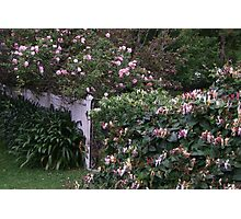 A Gate Covered in Honeysuckle and Roses! Photographic Print