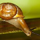 Snail Jump! by vasu