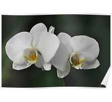 World of Orchids  Plate # 31 Poster
