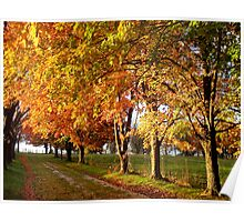 Early Autumn Light in Ozarks Poster