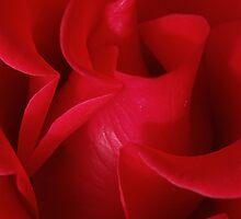 Rose # 6 by Emma Sterling