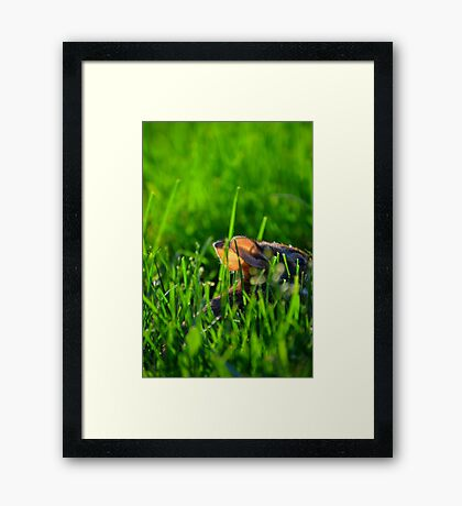 Eve of Bunnies Framed Print