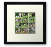 The tale of the Koala who was looking for his medicine tree Framed Print