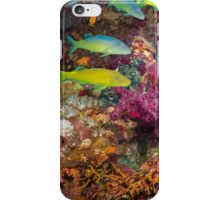 Fish of the ocean and coral  iPhone Case/Skin