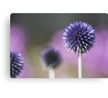 Globe Thistle  Butterfly Flower Canvas Print