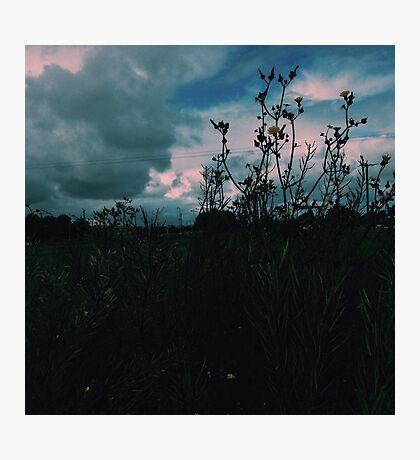 Wildflowers in Ireland Photographic Print