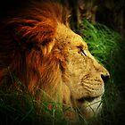 Lion by Jon Staniland