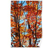 Vermont Red Maples Poster