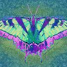 BUTTERFLY PLEASES WHEREVER IT GOES by Jean Gregory  Evans