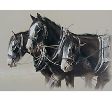 The Workhorse. Photographic Print