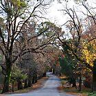 Beyers Avenue - Hill End NSW Australia by Bev Woodman