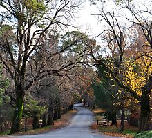 Beyers Avenue - Hill End NSW Australia by Bev Woodman