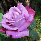 rose X by Floralynne