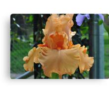 Orange Iris Beauty Canvas Print