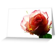 Rose - Impressions # 3 Greeting Card