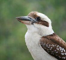 Aussie Kookaburra by aussiebushstick