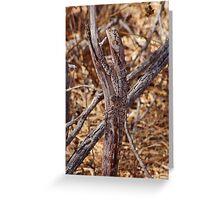 Frilled Lizard, Broome, Western Australia Greeting Card
