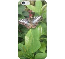 From the Butterfly Pavilion iPhone Case/Skin