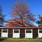 Showground Stables at Glen Innes by aussiebushstick