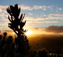 Sun setting by MuzzaPhotog