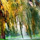 Weeping Willow Tree Daydreams by Carol F. Austin