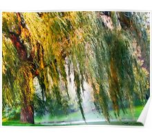 Weeping Willow Tree Daydreams Poster