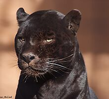 Panther by Loree McComb